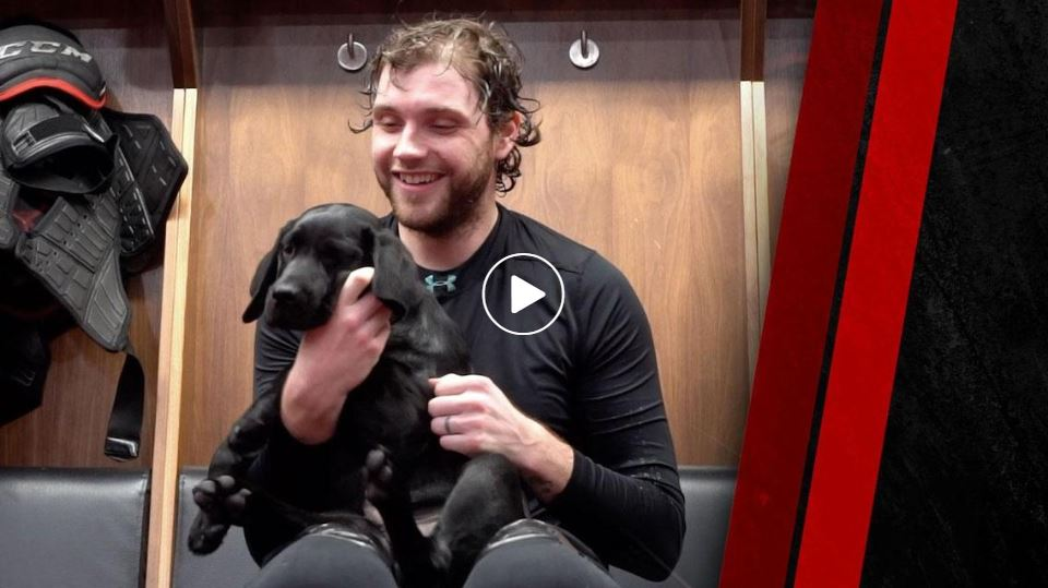 Still image of Ottawa Senators puppy video