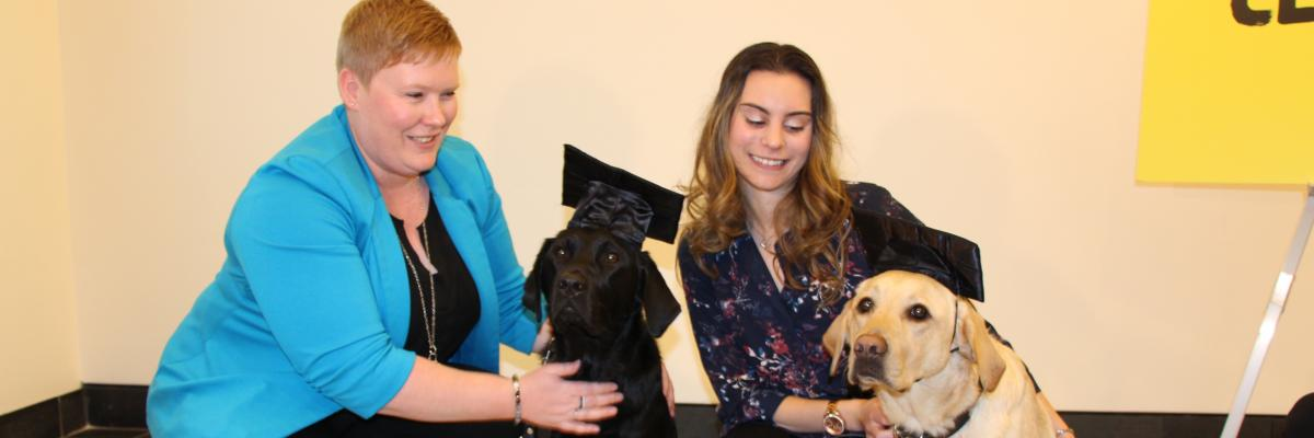 Ashley and Danson (a black Lab/Golden Retriever Cross) and Danika and Ulysses (a Golden Retriever). The dogs are wearing graduation caps.