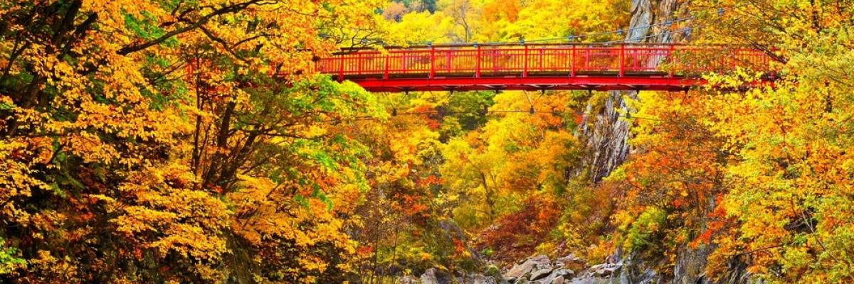 Bright Red Bridge over a river in the fall season