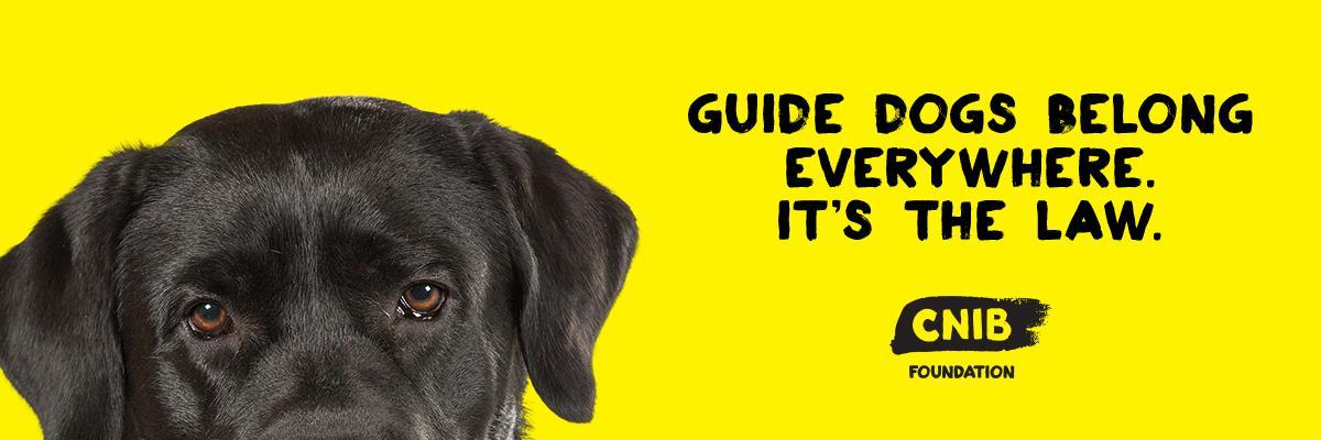"A yellow banner featuring a black lab pupping. The banner features his eyes peeking over the bottom of the page. Text ""Guide dogs belong everywhere. It's the law."""