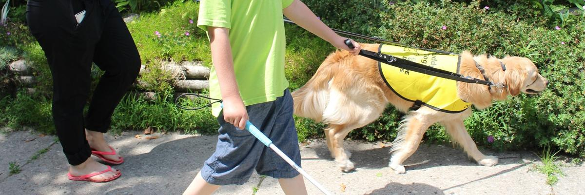 A dog in a CNIB Guide Dogs yellow vest walking with a boy using a white cane.