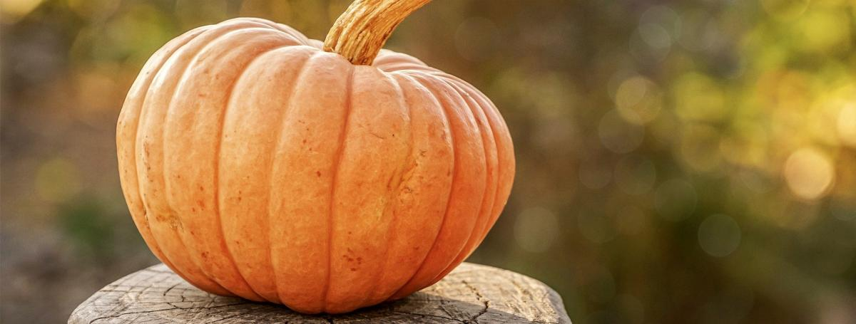 A pumpkin rests on a tree stump outdoors.