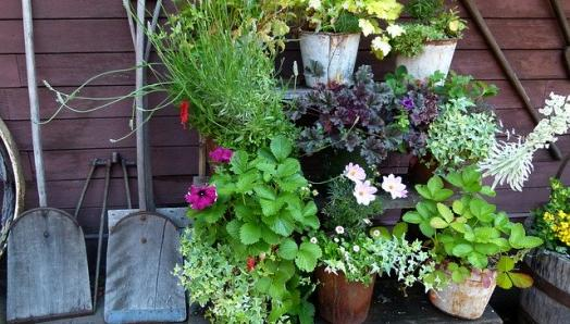 A small garden lined with potted plants on a shelf.